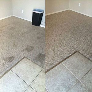 Pet Odor & Stain Removal